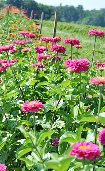 Flowerfarm