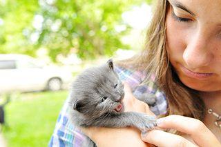 DSC_7233-kittens