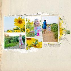 KPertiet_Sunflowersof2012-2PREV