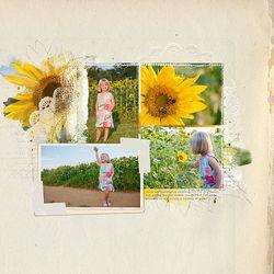KPertiet_Sunflowersof2012-1PREV
