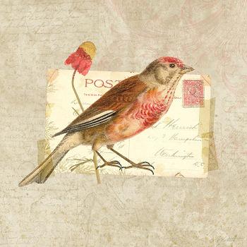 Kpertiet_traveler_birds_aprev