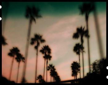 Palmtrees_1